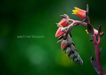 Watch me blossom by lil-crizzy