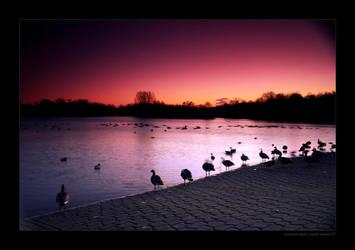 Sundown swim by idealclassic