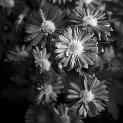 Touches of autumn - petals by Moniquette