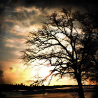 Tree by RickPatway