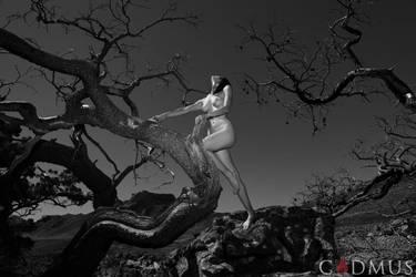 Cedars and solitude by metoikos