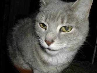 Aloof kitty close-up by Creativeness