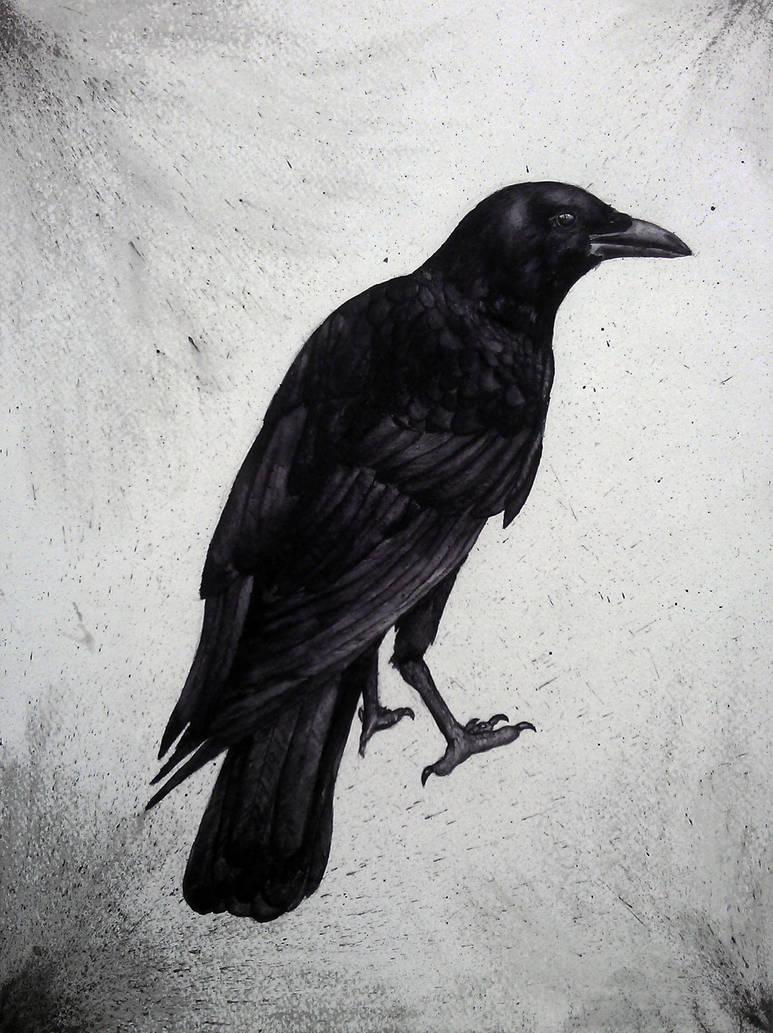 Crow by GreyCorbie