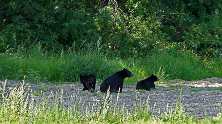 Some bears by GreyCorbie