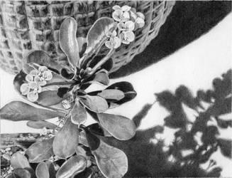 Succulent Shadows by GloriaDei