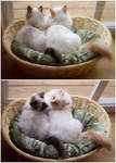 Chibi and Momo by Kumiko-Art