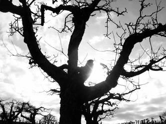 Dying Tree by ricardooo
