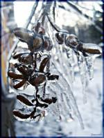 frozen by fan-to-me