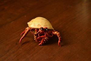 Hermit Crab by GoldenDaffadowndilly