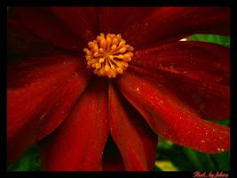 Red by febra-febra