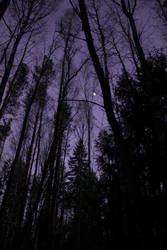 Purple Sky by WiksPhotography