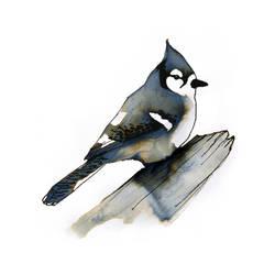 InkAnimals - Blue Jay by Duffzilla