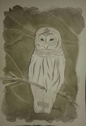 White Owl by lidianne