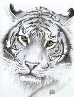 Tiger by Rockerz66
