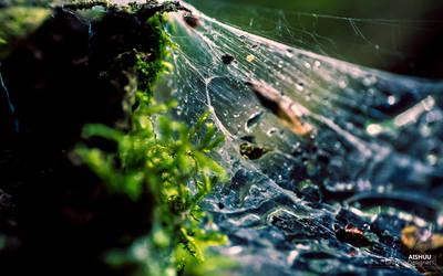 :: Cobwebs :: by Ai-Shuu