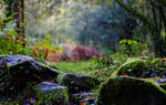 Amble In The Forest by LatchDrom