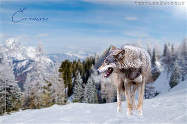 Evermore-Wolf by Ever-more-Ever-yours