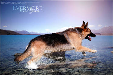 Evermore German Shepherd by Ever-more-Ever-yours
