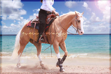 American-Quarter-Horse-Premade by Ever-more-Ever-yours