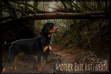 Audacity-Rottweiler by Ever-more-Ever-yours
