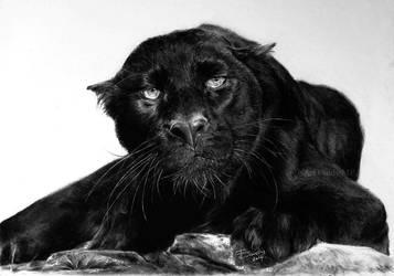 Black Panther by ArtCindyMF