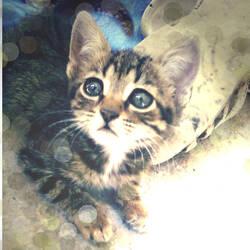Sweet Cat by Yagmurengin