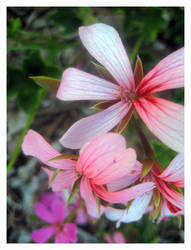 prettypinkflower by xstdx