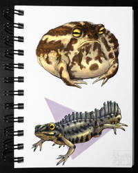 Frog and Newt - Colored version [Sketchbook] by drygani-art