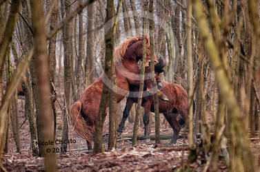 Play Time by firegold