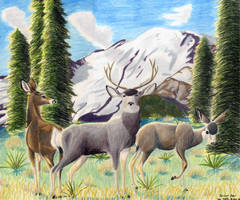 Rainier Deer by Moundfreek