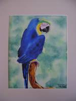 Beauty Blue by Moundfreek