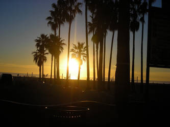 palm tree sunset by gbaby0101