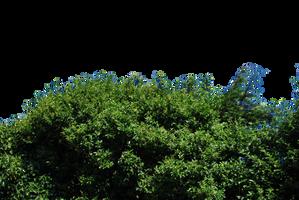 Hedge PNG.. by AledJonesDigitalArt