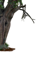Creepy Old Tree Side PNG.. by AledJonesDigitalArt