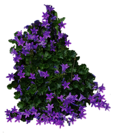 Purple Flowery Bush PNG.. by AledJonesDigitalArt