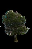 Tree Stock 01 July 2016.. by AledJonesDigitalArt