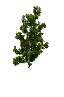 Cut Out Tree Stock 01 August 2016.. by AledJonesDigitalArt