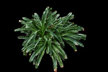 Grassy bush Stock.. by AledJonesDigitalArt