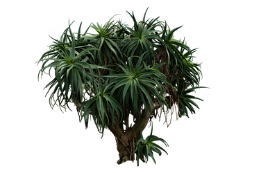 Palm Tree Stock.. by AledJonesDigitalArt