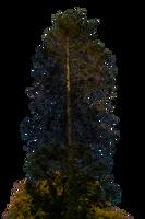 Pine Tree Stock 01 PNG.. by AledJonesDigitalArt