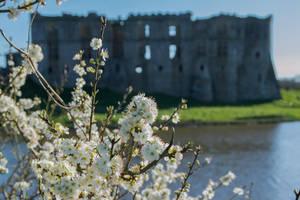 Blossom. by AledJonesDigitalArt