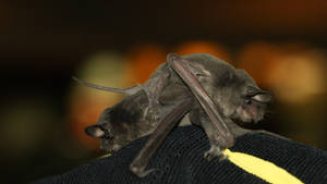 Bat rescue release by sankyaku