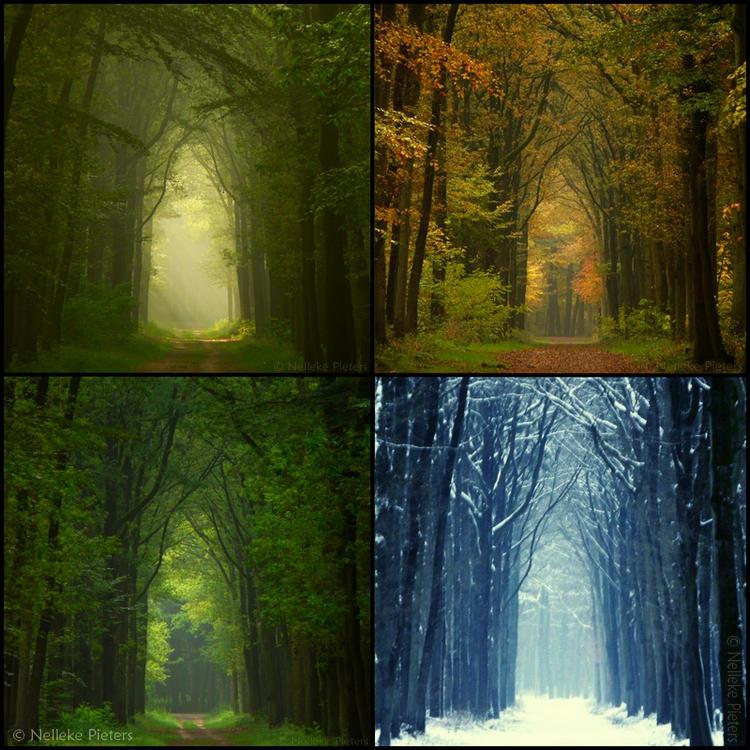 Four Seasons by Nelleke