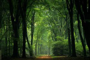 Early Autumn by Nelleke