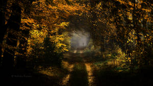 The Yellow Trail by Nelleke