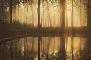 Morning Silence by Nelleke