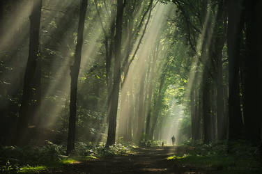 Light Up The Dark by Nelleke