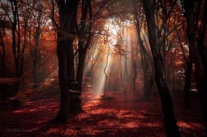 Phoenix Forest by Nelleke