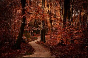 Autumn Path by Nelleke