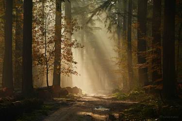 Autumn Sun by Nelleke